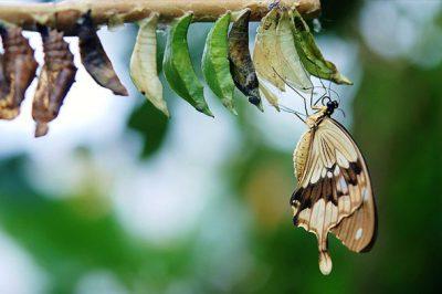 fluture-01